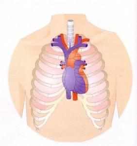 lokatie hart borstholte